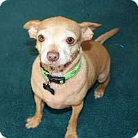 Adopt A Pet :: Minka- I have a video! - Temecula, CA
