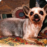 Adopt A Pet :: Chief - Whiting, NJ