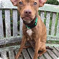 Adopt A Pet :: Rex - Fredericksburg, TX