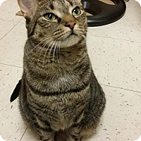 Adopt A Pet :: Isabella - Elmwood Park, NJ
