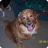Adopt A Pet :: Molly (pending) - Coldwater, MI