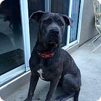Adopt A Pet :: Isabelle - Long Beach, CA
