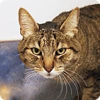 Adopt A Pet :: Gunner - Bellevue, WA