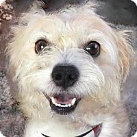 Adopt A Pet :: Baxter - Newington, VA