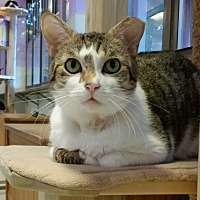 Adopt A Pet :: Solomon - Grayslake, IL