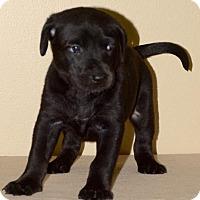 Adopt A Pet :: Gardenia - Little Rock, AR