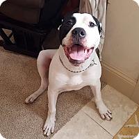 Adopt A Pet :: Axle - Houston, TX