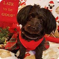 Adopt A Pet :: Lucy - Colorado Springs, CO