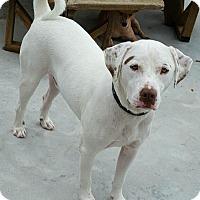 Adopt A Pet :: Flynn - Minneapolis, MN