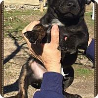 Adopt A Pet :: Lewis - Alta Loma, CA