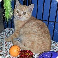 Adopt A Pet :: NYA - Golsboro, NC