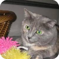 Domestic Shorthair Cat for adoption in Lancaster, Massachusetts - Lizzy