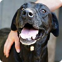 Adopt A Pet :: Fern - Huntersville, NC