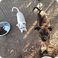 Adopt A Pet :: Sugar and Petey - Orange Cove, CA