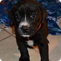 Adopt A Pet :: Jack - Foster, RI