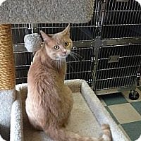 Adopt A Pet :: Noregard - Warren, OH
