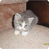 Adopt A Pet :: Ottis - Frenchtown, NJ