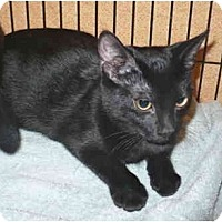 Adopt A Pet :: Amee - Colmar, PA