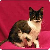 Adopt A Pet :: Pocahontas - Sacramento, CA