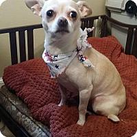 Adopt A Pet :: Tim - Norcross, GA