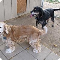 Adopt A Pet :: Spunky & Tali, a pair - Toluca Lake, CA