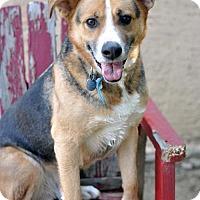 Adopt A Pet :: Barkley - Newhall, CA