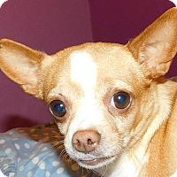 Adopt A Pet :: Ginger - MINNEAPOLIS, KS