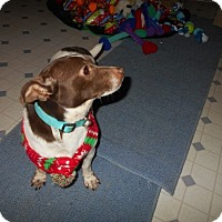 Adopt A Pet :: Brownie - Kannapolis, NC