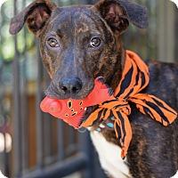 Adopt A Pet :: Woodrow - Baton Rouge, LA