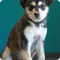 Adopt A Pet :: Pink - Waldorf, MD