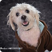 Adopt A Pet :: Casper - Miami, FL