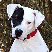 Adopt A Pet :: Star - Davison, MI