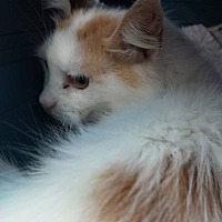 Adopt A Pet :: Toodles - Clarkson, KY