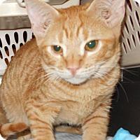 Adopt A Pet :: Yam Yam - Glendale, AZ