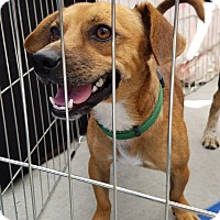Adopt A Pet :: Parker - Culver City, CA