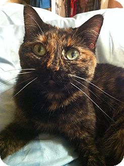 Domestic Shorthair Cat for adoption in Breese, Illinois - (Courtesy Post) Trixie