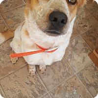 Adopt A Pet :: Baxter - Douglas, WY