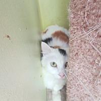 Adopt A Pet :: Jelly Bean - Coos Bay, OR