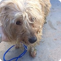 Adopt A Pet :: BUDDY - Fort Lauderdale, FL