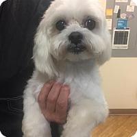 Adopt A Pet :: CLARA - Fort Lauderdale, FL