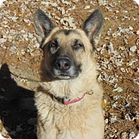 Adopt A Pet :: Karma - Nashua, NH