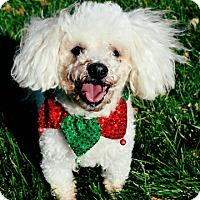Adopt A Pet :: Pixie - Dublin, CA