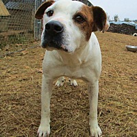Adopt A Pet :: Jack - Melbourne, AR