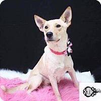 Adopt A Pet :: Jazmine - DeForest, WI