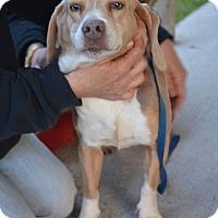 Adopt A Pet :: Noel - Virginia Beach, VA