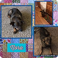 Adopt A Pet :: Nora - Fort Wayne, IN