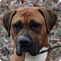 Adopt A Pet :: Loretta - Hagerstown, MD