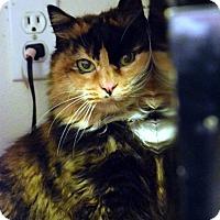 Adopt A Pet :: Fluff - Boise, ID