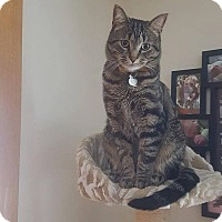 Adopt A Pet :: Leo - THORNHILL, ON