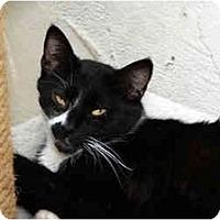 Adopt A Pet :: Julia - Los Angeles, CA